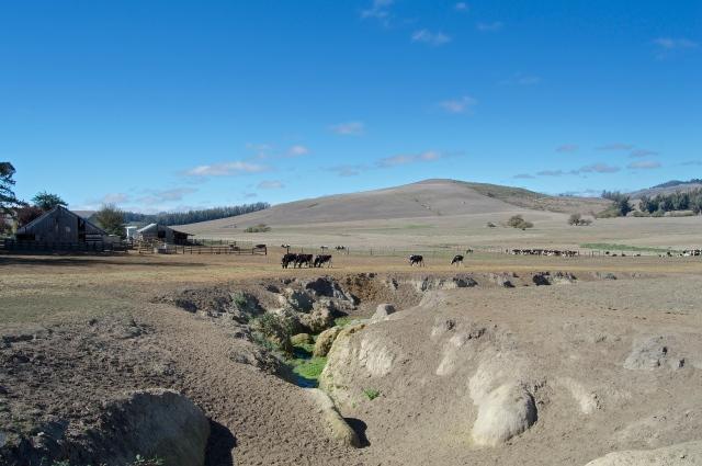 Sonoma Farm