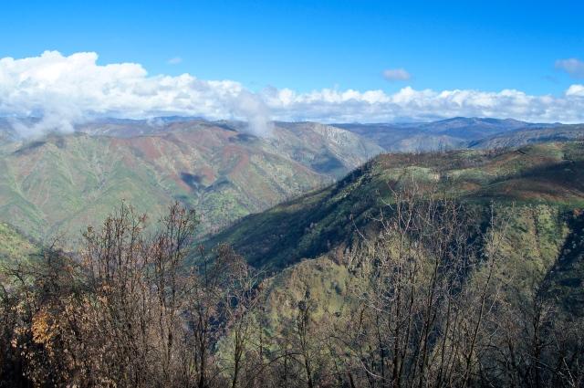 Transitional Sierra