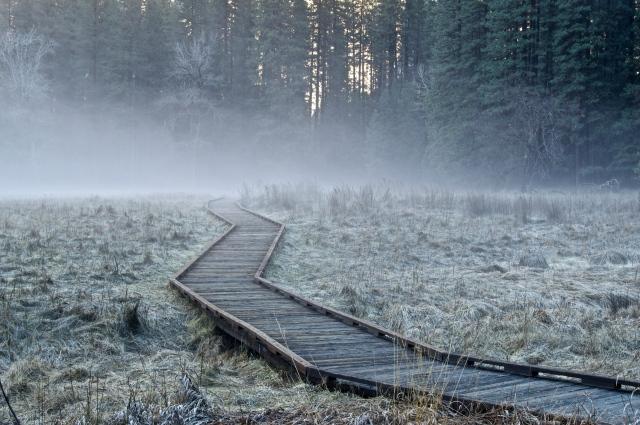 Foggy Steps